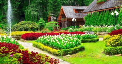 Best Gardening Tips for Beginners_www.usmag.club